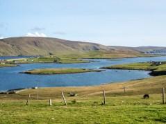 Shetland-10