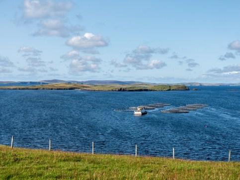 Shetland-8