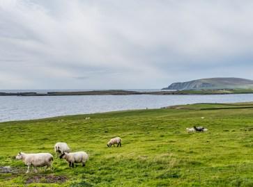 Shetland Mainland Sumburgh Head-20