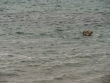 Melby Beach Shetland-14