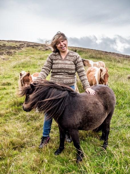 Poneys Shetland-4