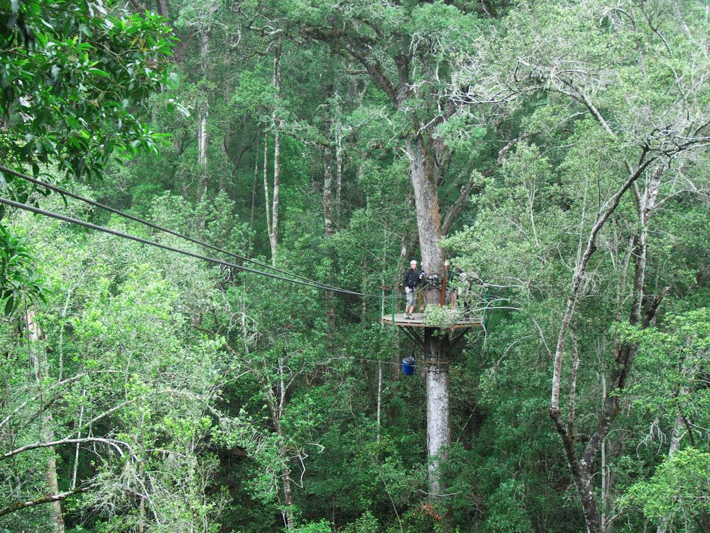 Tsitsikama Canopy Tour
