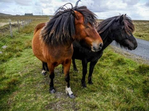 Shetland-Unst-18