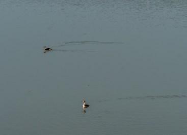 Acquascope, Lac de Virelles