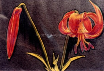 Tiger Lily - NFS • Prints Available