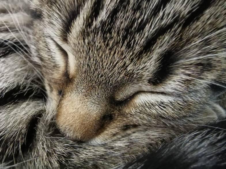 Kitten-002