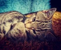 Kitten-003