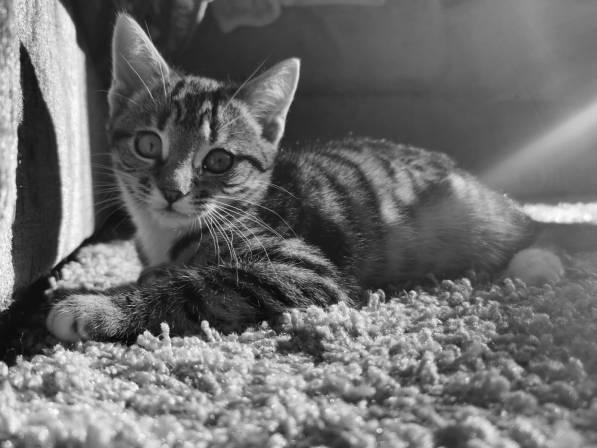 Kitten-004
