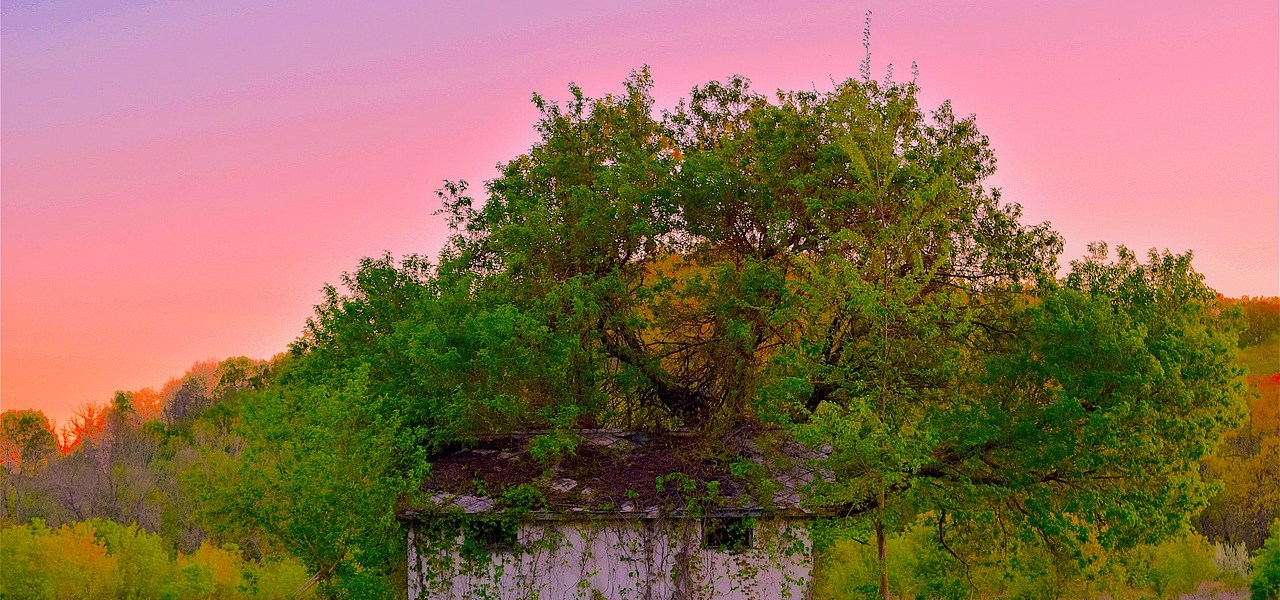 An abandoned tree