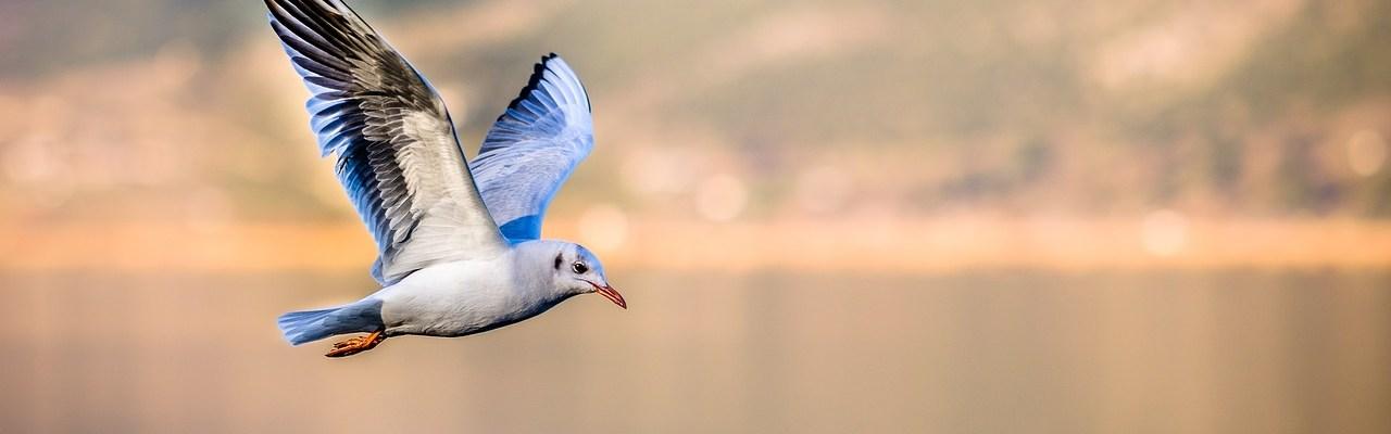 Last Bird