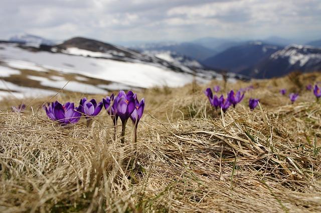 Himalayan flowers