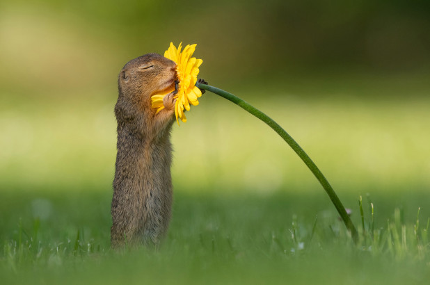 Squirrel smelling a flower, Cutest Pictures of Squirrels