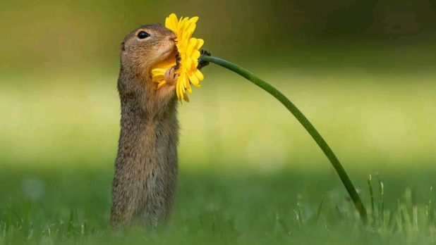 Squirrel hugging a flower, Cute Photos of Squirrels