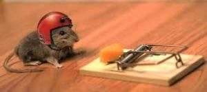 Safety Mouse - Medium Risk