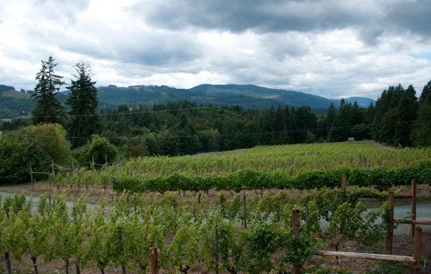 Vancouver Island wine & spirits