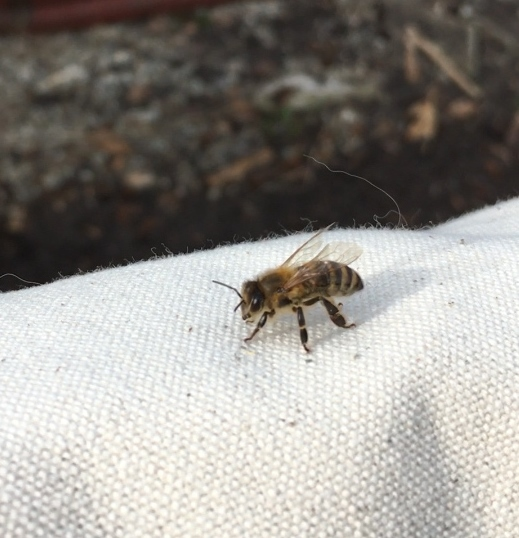 backyard urban beekeeping Edmonton Alberta