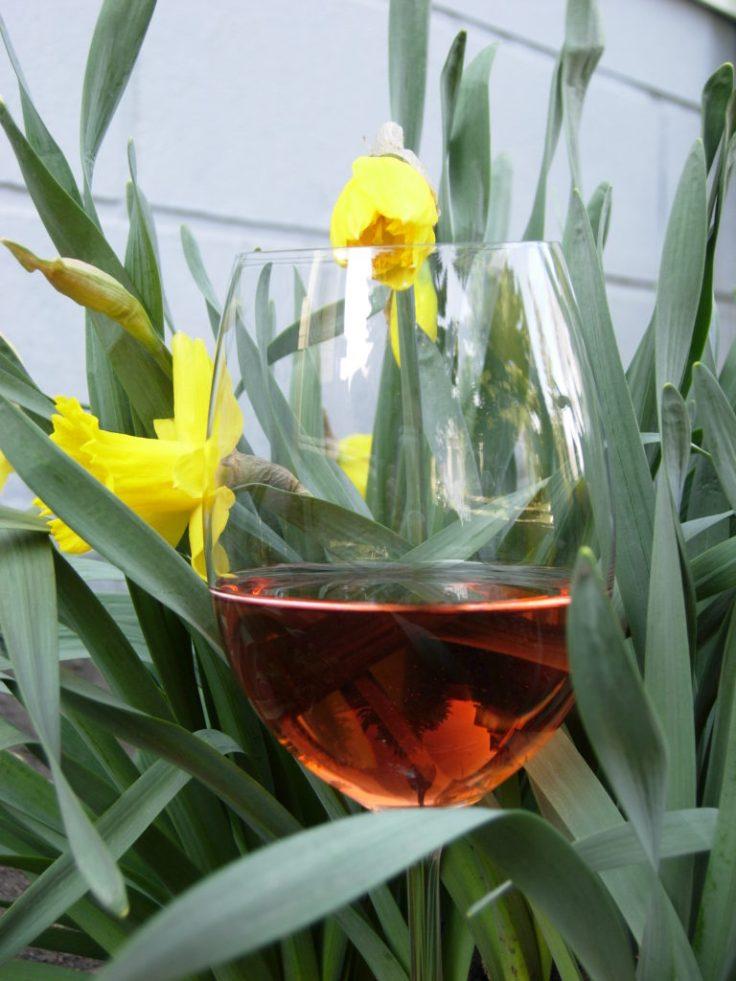 rose pink wine spring daffodil