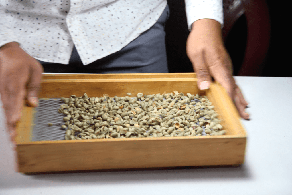 specialty coffee in Peru_aproeco_sorting coffee beans