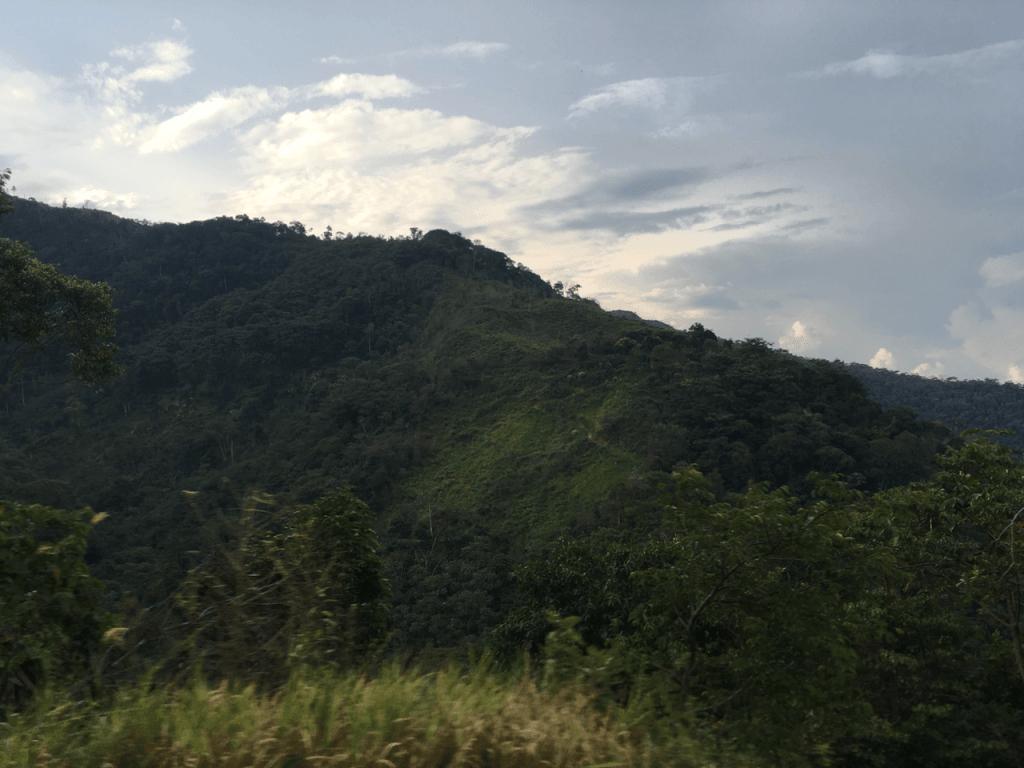 specialty coffee in Peru_rain forest