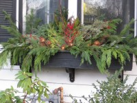 Winter Window Boxes  Mel's Green Garden