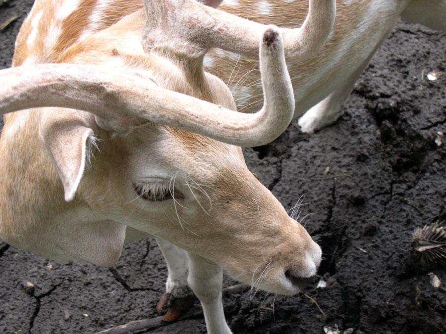 deer.jpg?fit=900%2C675