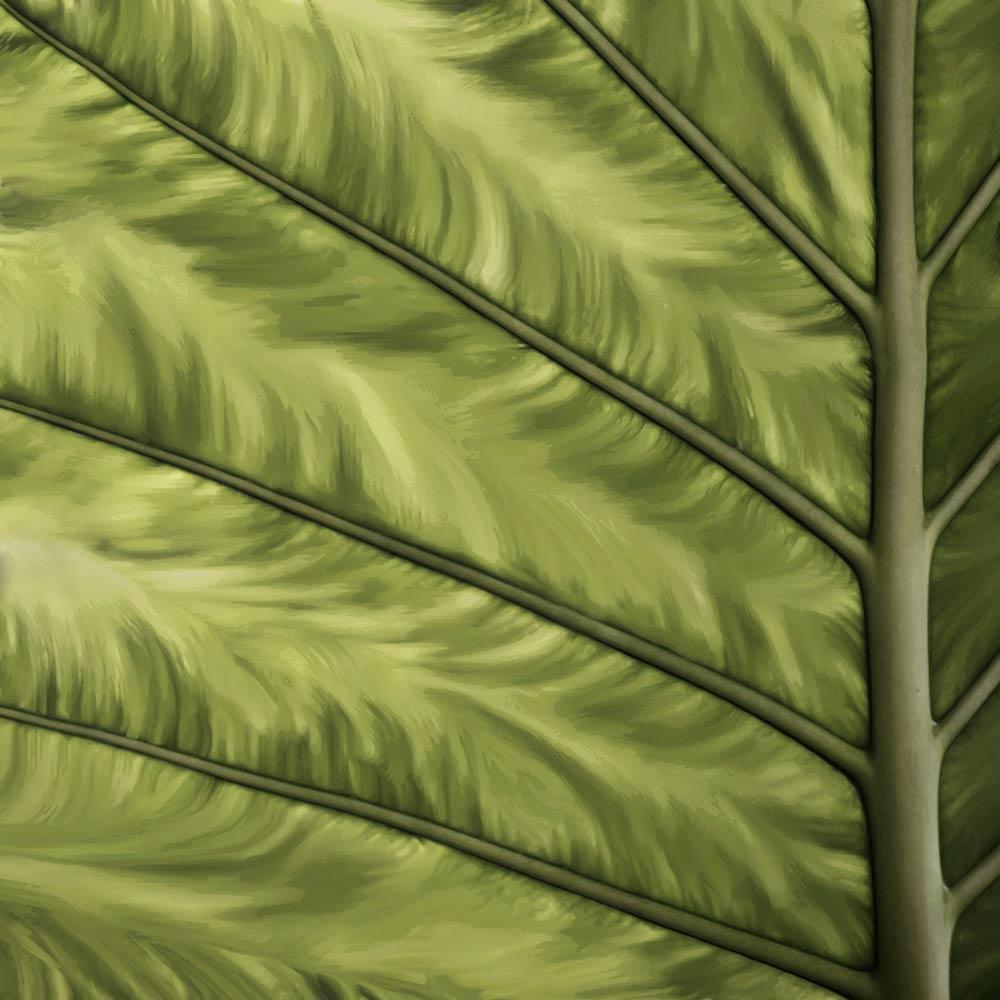 leaf.jpg?fit=1000%2C1000