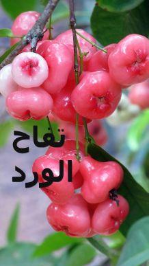 تفاح الورد 5e
