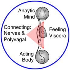 "Mind-Body & Yin-Yang in Yoga Therapy & Yoga-based Bodywork"" structural bodywork, yoga therapy"