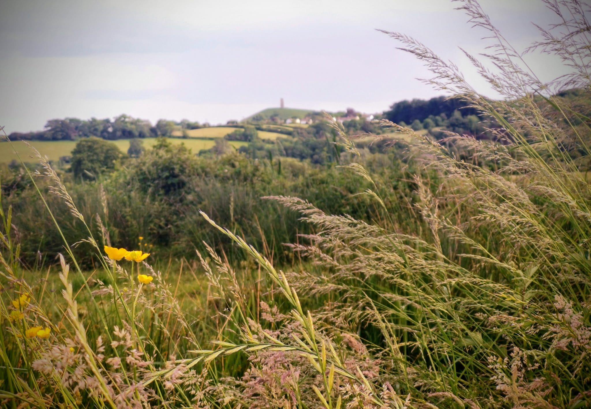 Glastobury Tor from the Levels Summer 2021