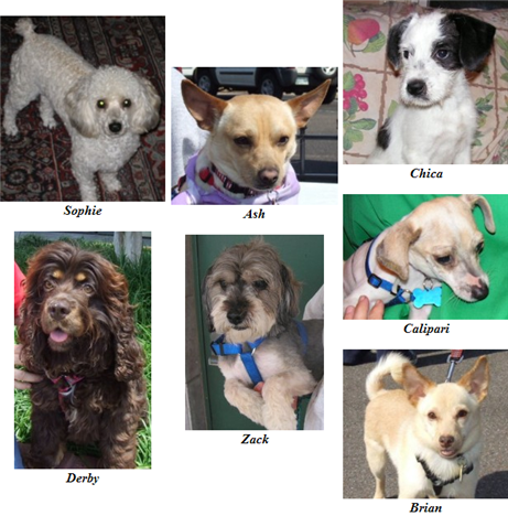 Adoptions on May 18, 2008