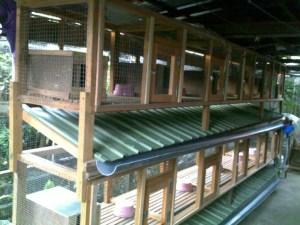 cara membuat kandang ayam bulat dari bambu  Membuat Kandang
