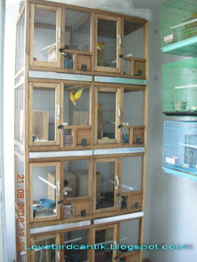 Cara Membuat Kandang Burung Lovebird : membuat, kandang, burung, lovebird, Membuat, Sangkar, Burung, Lovebird