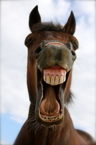 Funny Horse Face : funny, horse, Create, Horse's, Funny, Horse, Pictures, Meme-arsenal.com