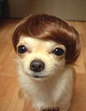 Chihuahua Squinting Meme : chihuahua, squinting, Chihuahua, Caption, Generator