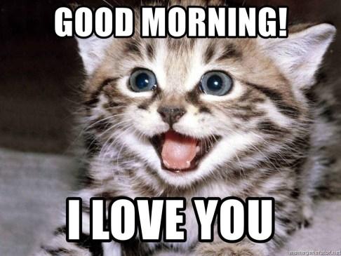 good morning! I love you - HAPPY KITTEN | Meme Generator