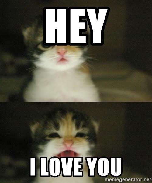 Hi I Love You Meme : Adorable, Kitten, Generator