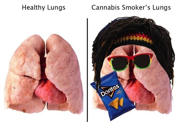 healthy vs cannabis smoker