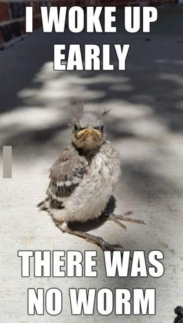 http://funnyand.com/wp-content/uploads/2014/07/Angry-Bird-Meme.jpg