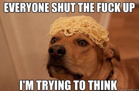http://img.izifunny.com/pics/2013/20130206/640/funny-dog-memes-50-pics_25.jpg
