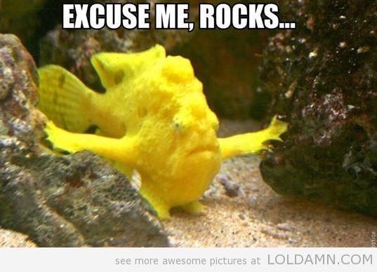wpid-funny-fish-little-arms-meme.jpg