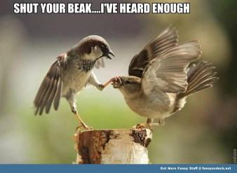 http://funnyasduck.net/wp-content/uploads/2012/10/funny-shut-your-beak-bird-pic.jpg