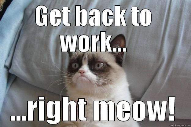Funny Cat Memes: Eatinglikethefrench
