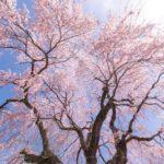 2019悠久山の桜まつりの花見の屋台は?迷子や困った時のマップやトイレの情報も!