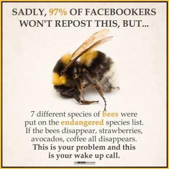 bees endangered species list meme