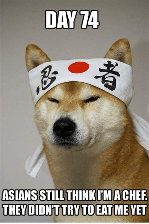 Asian Dog Meme : asian, Asian, Memes