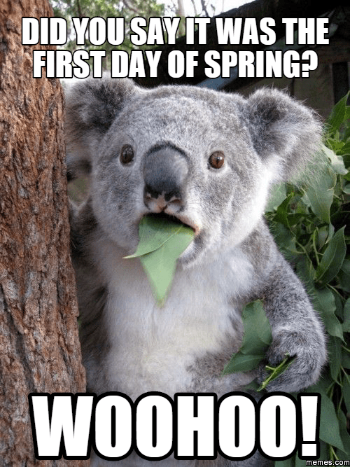 First Day Of Spring Funny Pics : first, spring, funny, First, Spring, Memes