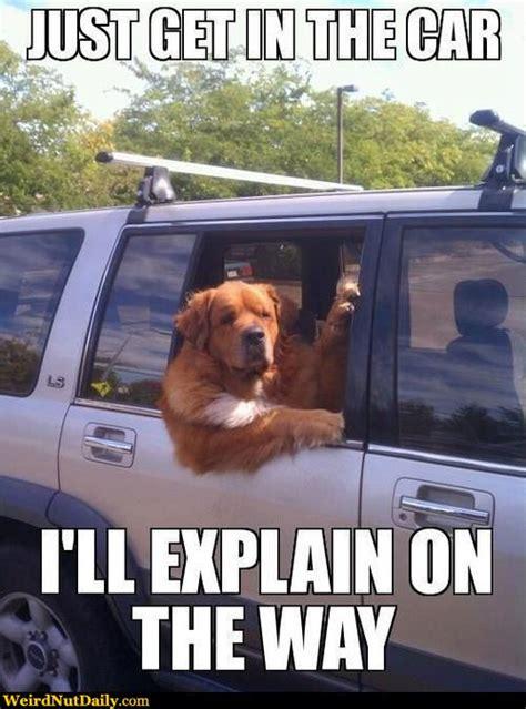 Dog Driving Meme : driving, Window, Memes