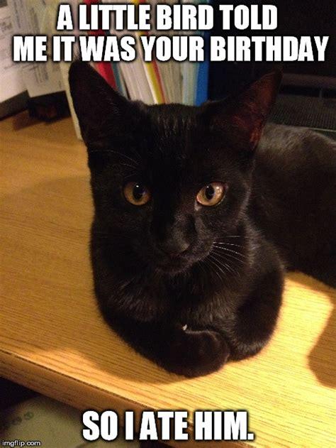 Black Cat Birthday Meme : black, birthday, Black, Birthday, Memes