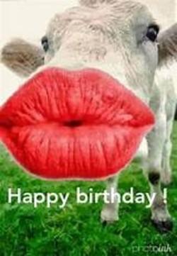 Cow Happy Birthday Meme : happy, birthday, Happy, Birthday, Memes