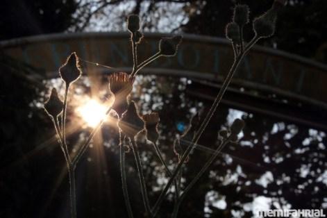 Sinar mentari di Kebun Botani